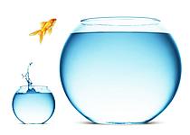 little-fish-big-pond